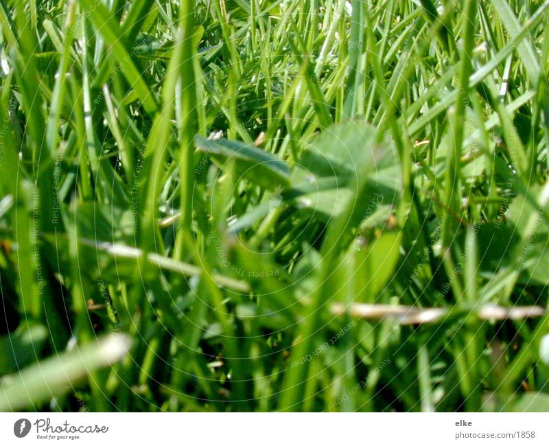 Nature Green Meadow Grass