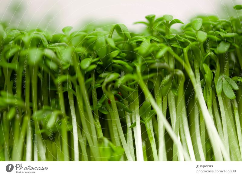 jazz ma cress Food Nutrition Lunch Buffet Brunch Banquet Business lunch Organic produce Finger food Asian Food Plant Delicious Natural Thin Green Colour photo