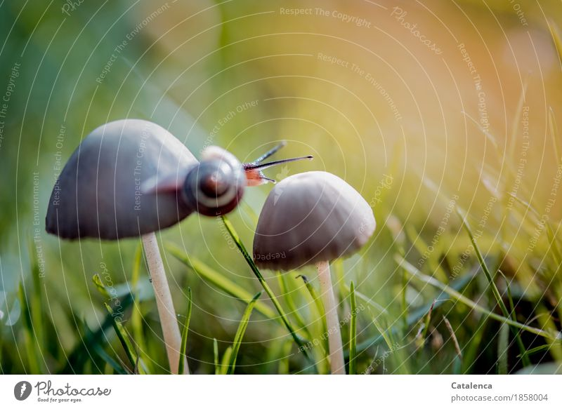traverse Nature Plant Animal Autumn Grass Mushroom Meadow Snail 1 Movement Esthetic Athletic Slimy Brown Gold Green Orange Contentment Willpower Attentive