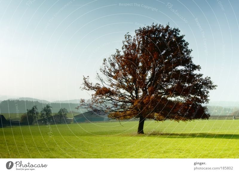 The third season Harmonious Contentment Landscape Autumn Beautiful weather Tree Meadow Hill Esthetic Blue Brown Green Moody Branchage Shadow Light