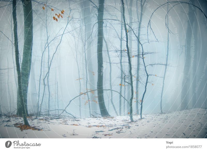 Winter snowy forest Nature Blue White Tree Landscape Leaf Dark Forest Black Environment Yellow Autumn Snow Gray Tourism