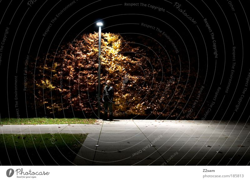 Tree City Calm Adults Dark Environment Night Park Glittering Masculine Modern Esthetic Exceptional Stand Cool (slang) Illuminate