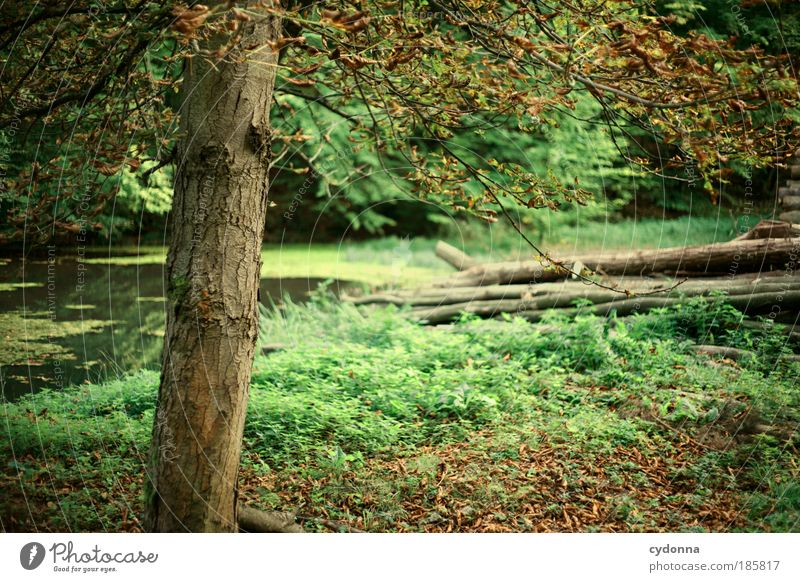 Nature Beautiful Tree Plant Calm Leaf Forest Life Relaxation Autumn Grass Dream Landscape Environment Time Trip