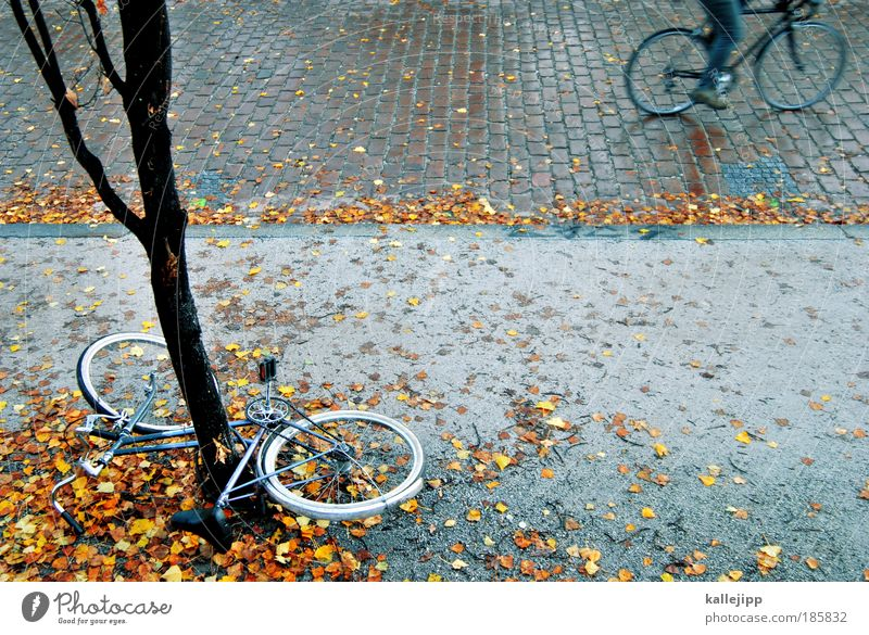 Human being Tree Leaf Environment Street Autumn Lanes & trails Park Rain Bicycle Leisure and hobbies Wet Transport Lifestyle Driving Sidewalk