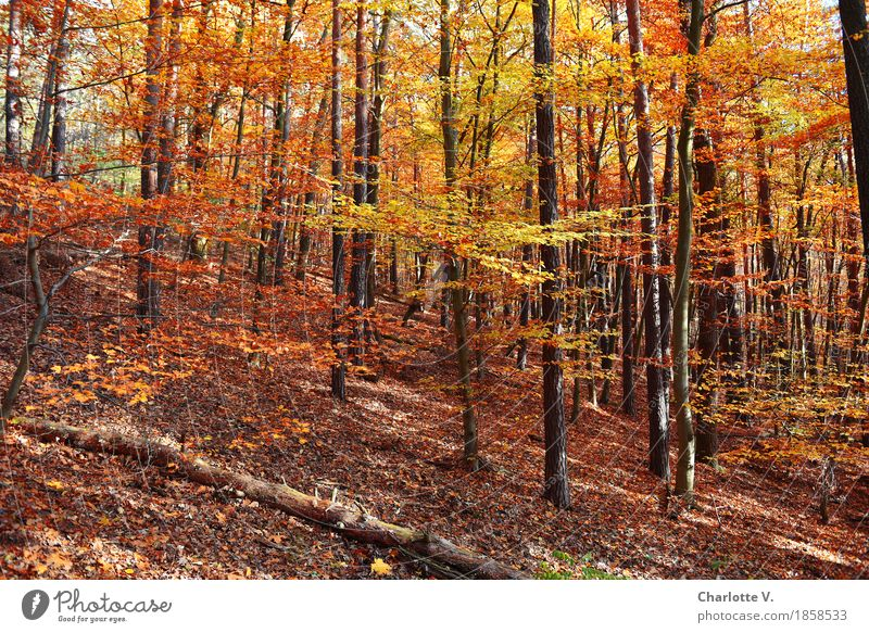 Nature Plant Colour Beautiful Tree Landscape Calm Forest Yellow Life Autumn Natural Wood Time Brown Moody