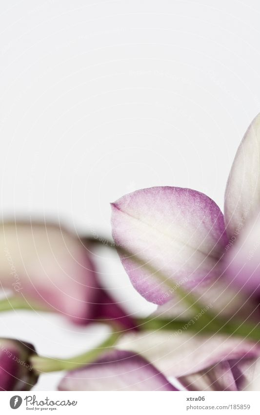 orchid Flower Orchid Blossom Esthetic Delicate Smooth Colour photo Subdued colour Interior shot Close-up
