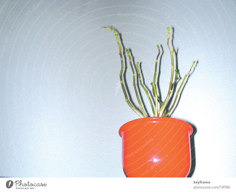 flower pot Flower Empty Living or residing plant Sparse
