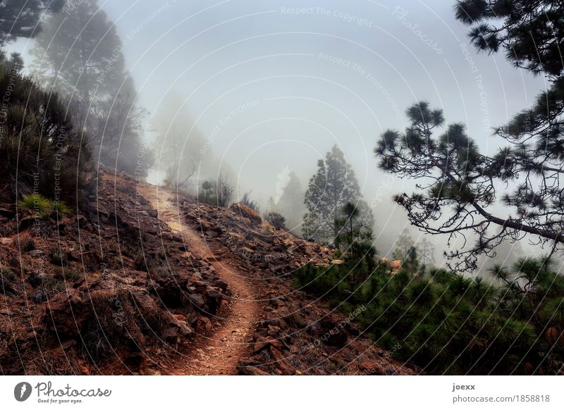 Sky Green Forest Mountain Cold Lanes & trails Autumn Gray Brown Sand Weather Fog Hope Infinity Ambiguous