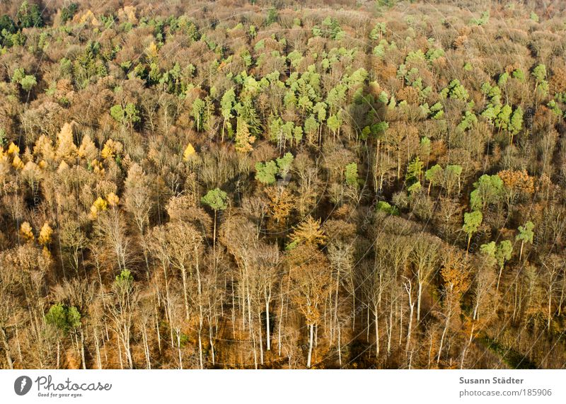 Tree Green Leaf Forest Autumn Meadow Brown Orange Large Roof Tower Hill Balcony Manmade structures Shadow