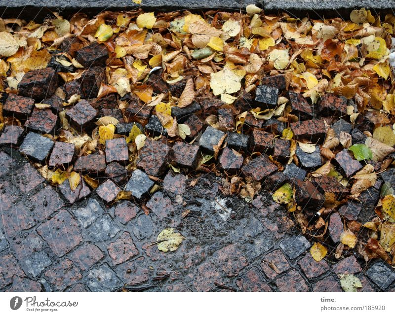 Leaf Yellow Autumn Stone Brown Dirty Weather Wet Construction site Many Pavement Muddled Sharp-edged Redevelop Stony Renewal
