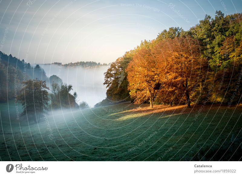 Early in the morning Relaxation Calm Meditation Nature Landscape Water Autumn Beautiful weather Fog Plant Grass Lake Swimming & Bathing Observe Hiking Esthetic