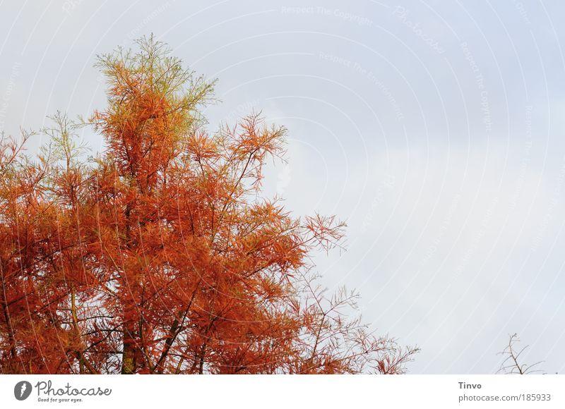 Happy birthday, Photocase! Nature Sky Autumn Tree Wild plant Park Twigs and branches reddishly Orange colour contrast Autumnal Seasons Colour photo