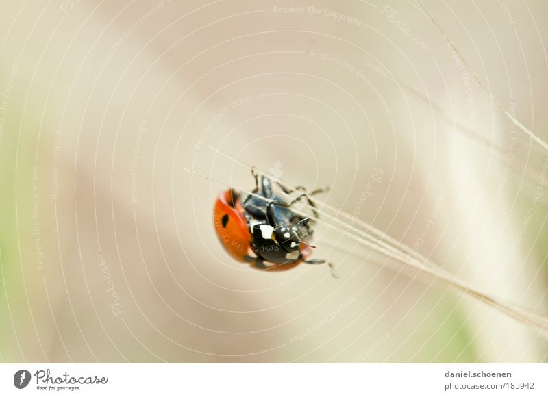 Summer Animal Grass Movement Happy Lanes & trails Contentment Success Future Insect Mobility Ladybird