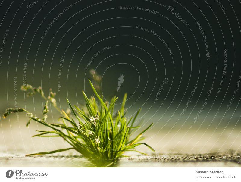 Sun Green Plant Summer Grass Wood Lake Warmth Bright Coast Earth Bushes Blossoming Illuminate Footbridge Moss