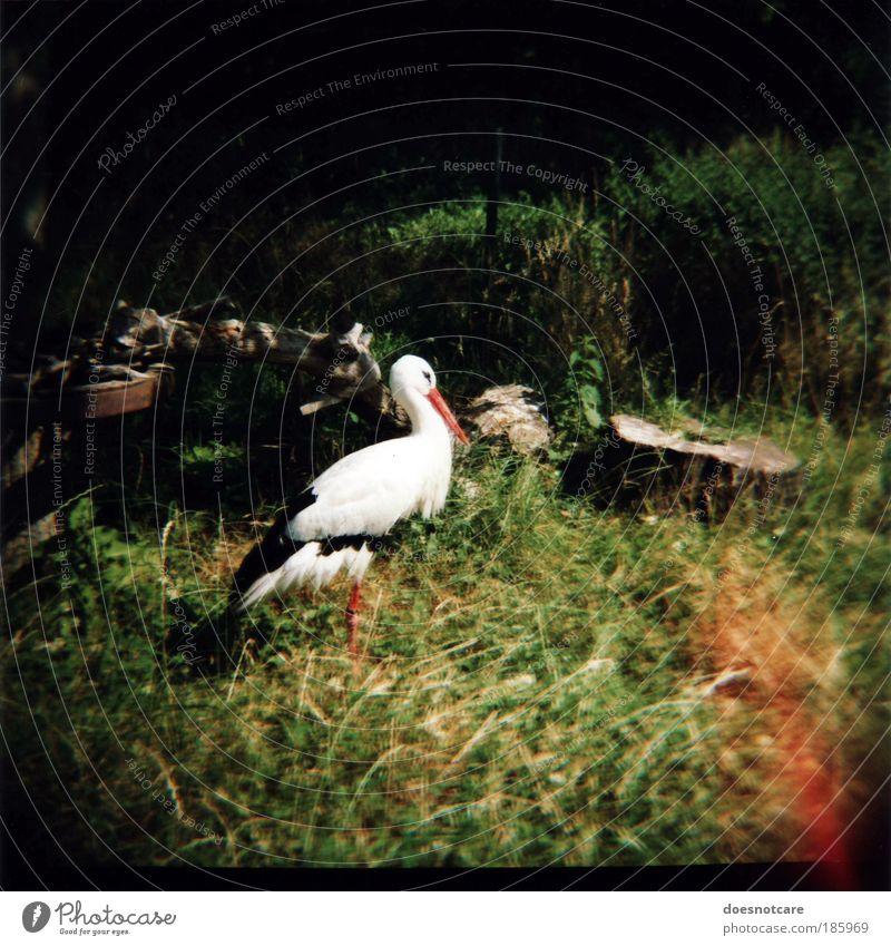 Nature Animal Meadow Bird Stand Zoo Analog Wild animal Tree trunk Stork Medium format Wilderness Vignetting Roll film Patch of light Light leak