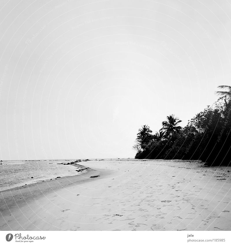 HAPPY BIRTHDAY PHOTOCASE! Nature Landscape Sand Water Cloudless sky Plant Tree Beach Ocean To enjoy Vacation & Travel India Black & white photo Exterior shot