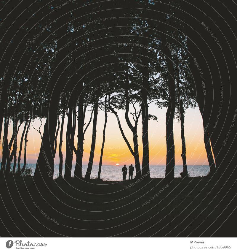 Nature Summer Sun Tree Ocean Landscape Forest Black Environment Life Senior citizen Happy Couple Together Orange Gold