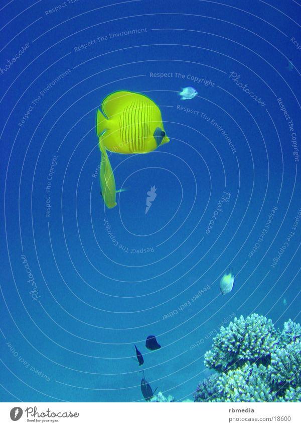 Water Ocean Blue Fish Dive Coral Sea water