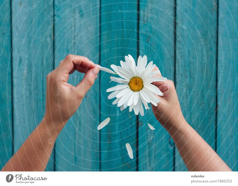 Two female hands hold in hand big white daisy petals Human being Woman Youth (Young adults) Blue White Flower Hand Adults Love Emotions Happy 13 - 18 years