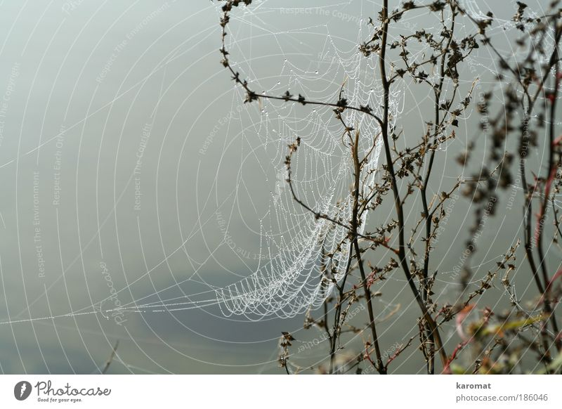 Nature Water Loneliness Gray Sadness Drops of water Gloomy Island Net Dew Spider Rügen Spider's web