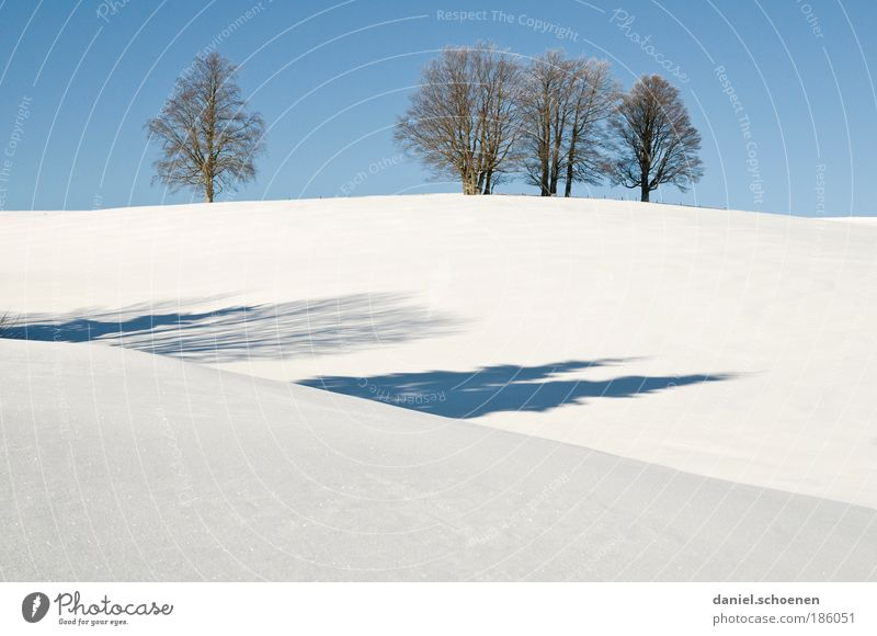 Blue White Tree Plant Winter Calm Snow Ice Climate Frost Beautiful weather Cloudless sky Black Forest