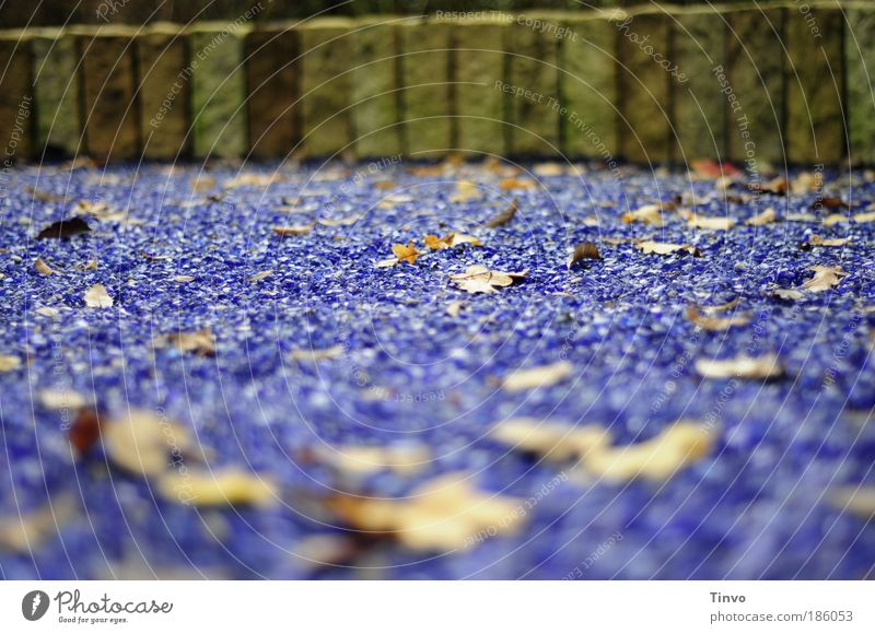 sea of leaves Autumn Leaf Garden Park Wall (barrier) Wall (building) Movement Lie To dry up Old Exceptional Blue Boundary little wall rampart glass stones