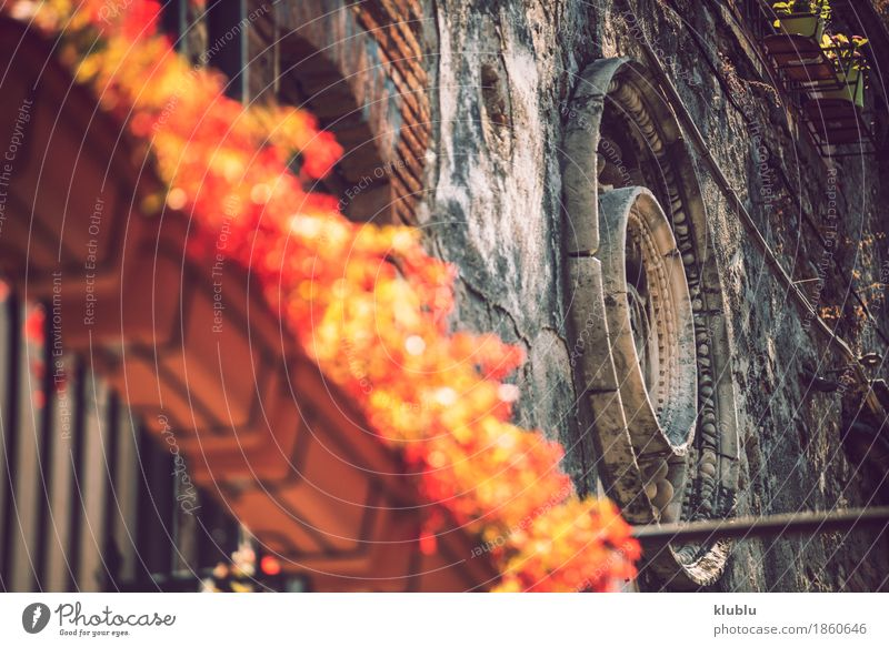 Detail view of typical urban sicilian decoration Decoration Art Plant Flower Church Building Architecture Balcony Ornament Old Historic Religion and faith Italy