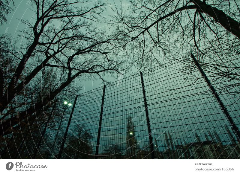 City Tree Dark Park Leisure and hobbies Branch Skyline Fence Tree trunk Twig Grating Penitentiary November Football pitch Floodlight Fold