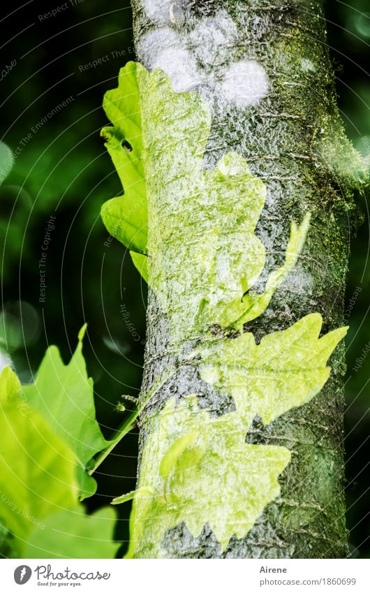 adhesion Plant Tree Leaf Tree trunk Oak leaf Forest Bright Green Loyalty Nature Power Growth Change Symbols and metaphors Double exposure Colour photo