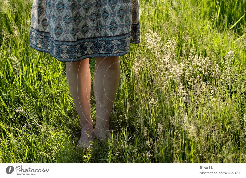 Nature Youth (Young adults) Girl Beautiful Sun Green Plant Summer Joy Meadow Feminine Emotions Grass Happy Landscape Legs
