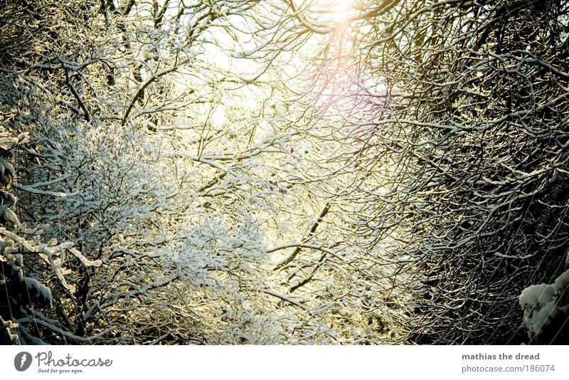 THE SUN COMES OUT Environment Nature Landscape Plant Sky Sunlight Winter Beautiful weather Ice Frost Snow Tree Bushes Forest Mountain Peak Friendliness