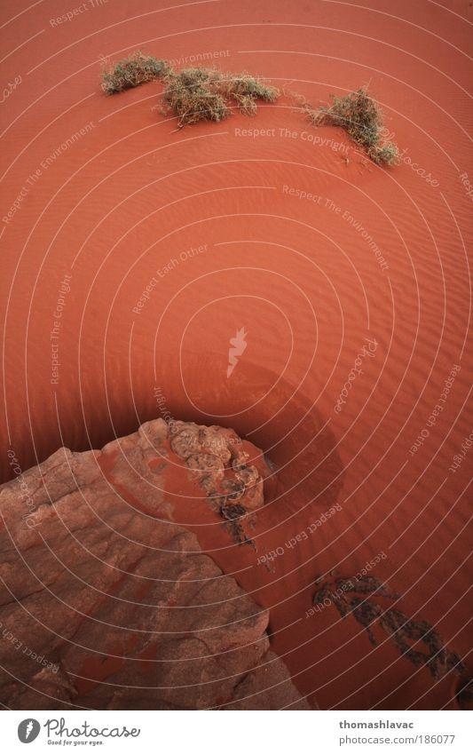Wadi Rum desert Nature Plant Red Vacation & Travel Sand Landscape Environment Rock Desert