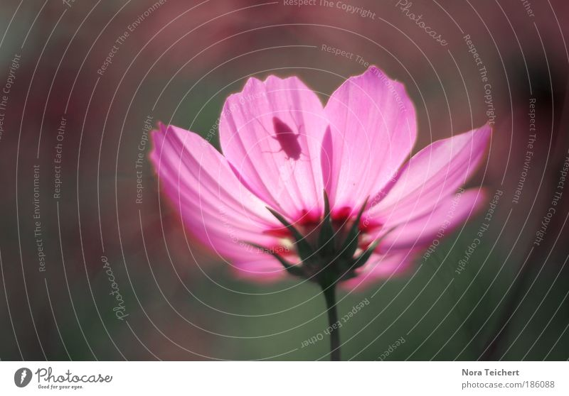 Nature Beautiful Flower Plant Summer Calm Leaf Blossom Movement Dream Park Landscape Moody Pink Environment Crazy