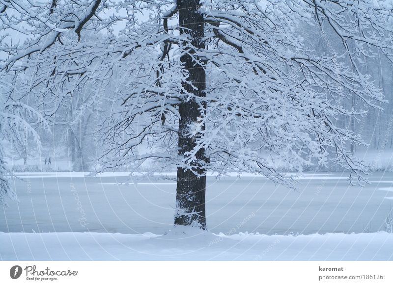 Nature Water Blue White Tree Winter Cold Snow Lake Park Ice Frost Rügen Virgin snow