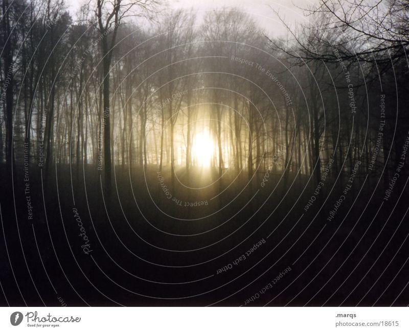 Sun Calm Loneliness Forest Dark Autumn Mountain Fear Threat Panic
