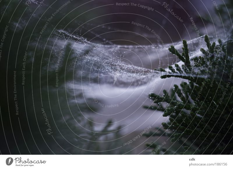 Christmas spinning Environment Nature Drops of water Autumn Winter Bad weather Foliage plant Park Forest Spider Line Net Network Dark Authentic Gloomy Green