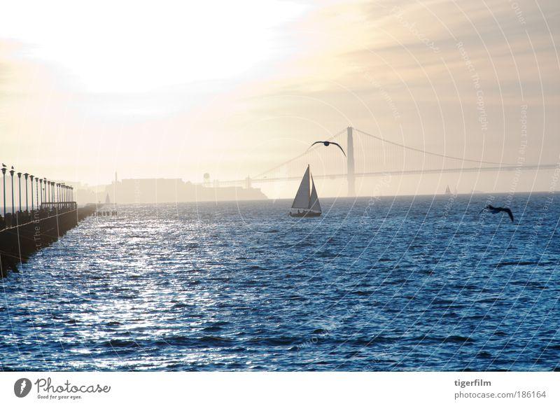 sunset on alcatraz Blue Water Sun Vacation & Travel Ocean Calm Landscape Freedom Moody Bird Waves Gold Glittering Esthetic Bridge Cool (slang)