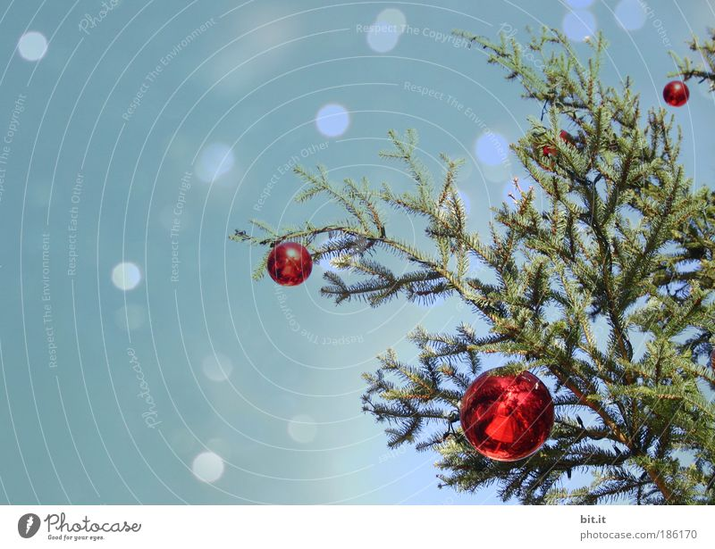 Tree Christmas & Advent Sky Winter Snow Snowfall Moody Feasts & Celebrations Glittering Design Romance Christmas tree Kitsch Decoration