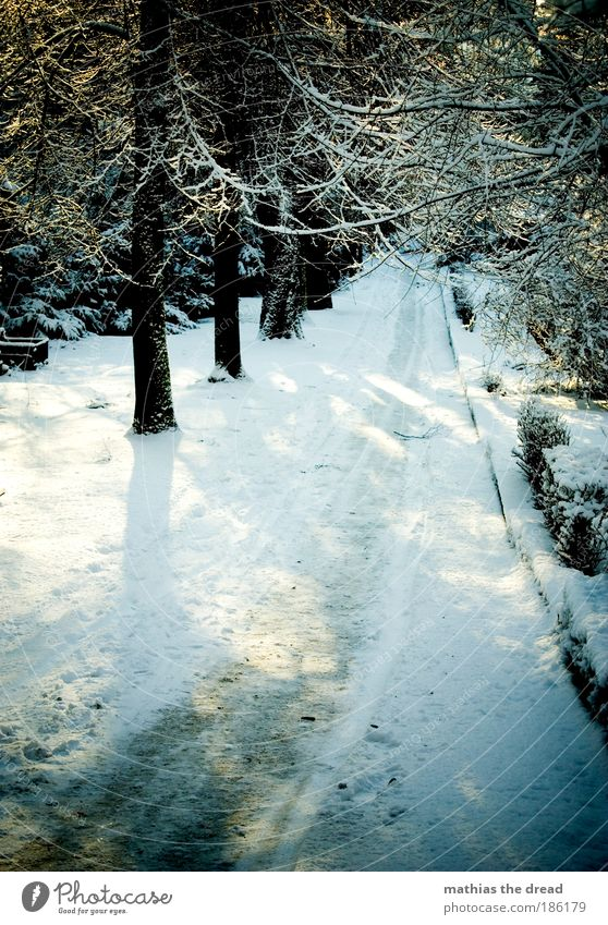 Nature White Plant Winter Street Forest Cold Snow Mountain Shadow Lanes & trails Park Landscape Ice Hiking