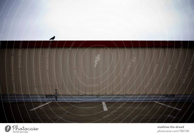 RABE ON RACER Sky Autumn Bad weather Deserted Industrial plant Parking garage Building Architecture Facade Transport Motoring Street Animal Bird Wing 1 Dark