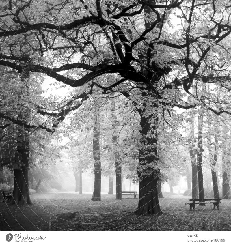 Nature Plant Tree Calm Landscape Environment Grass Lanes & trails Park Germany Weather Earth Climate Fog Europe Bushes