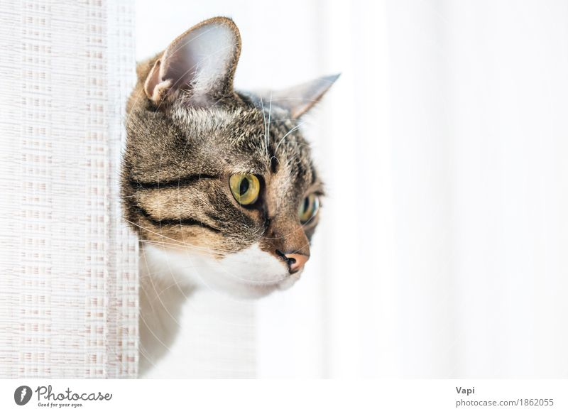 Gray striped and curiously looking cat Animal Pet Cat Animal face 1 Sit Small Funny Cute Brown Yellow Black White Kitten Strange background Domestic Striped