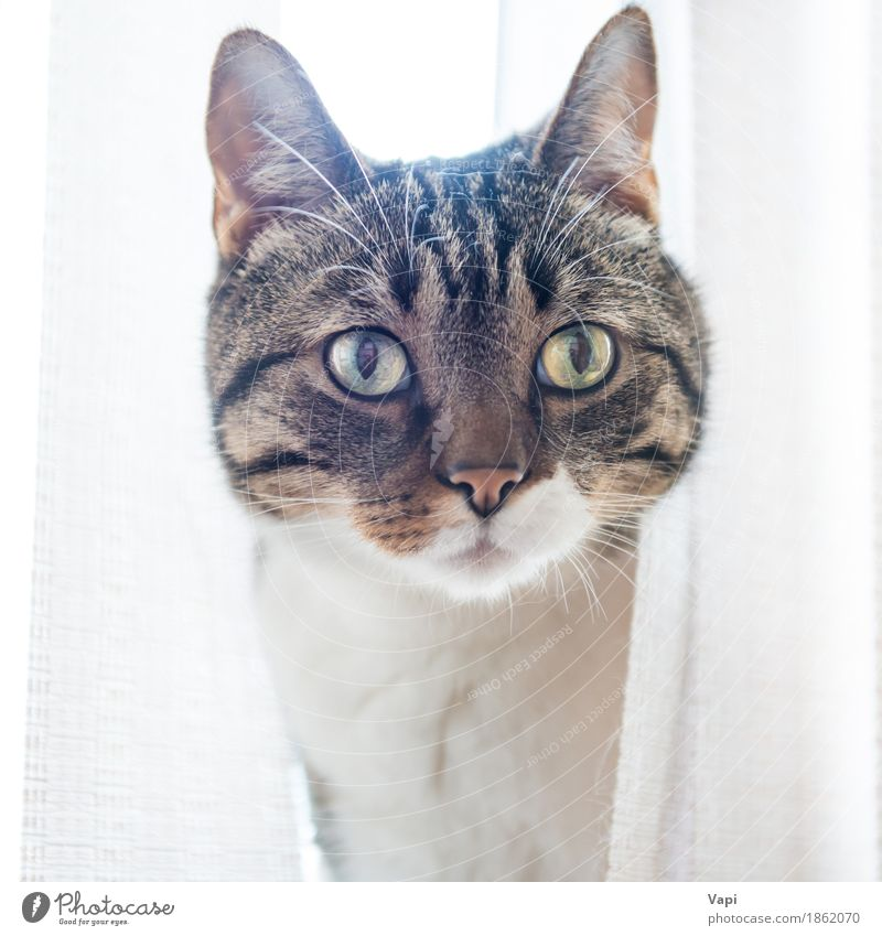 Gray striped and curiously looking cat Beautiful Face Animal Pet Cat Animal face 1 Sit Small Funny Cute Brown Yellow Black White Kitten Strange background