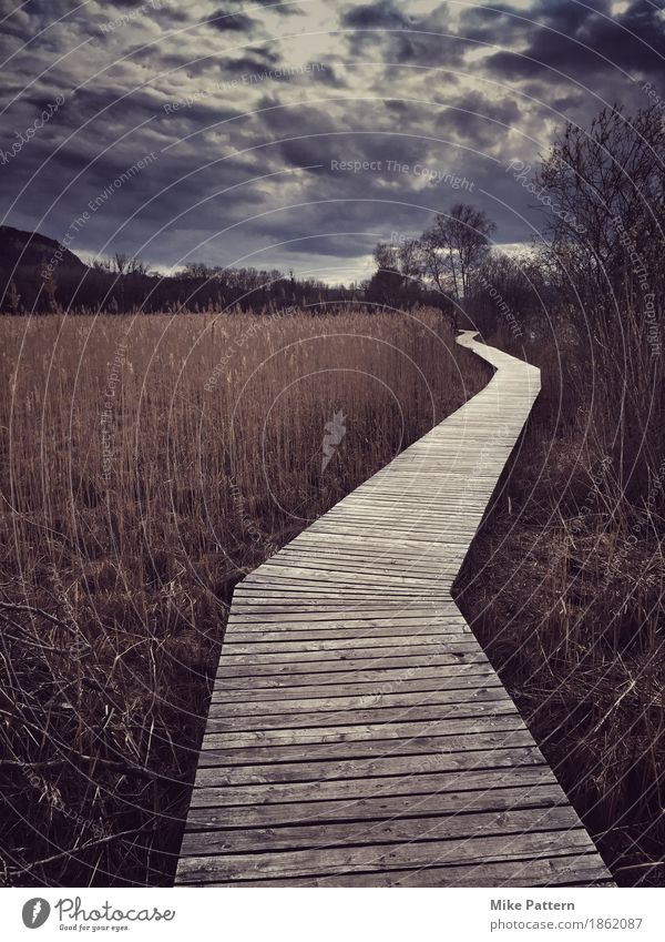 autumn trail Environment Nature Landscape Clouds Autumn Bad weather Grass Bushes Bog Marsh Lake Walking Threat Dark Creepy Gloomy Brown Concern Reluctance