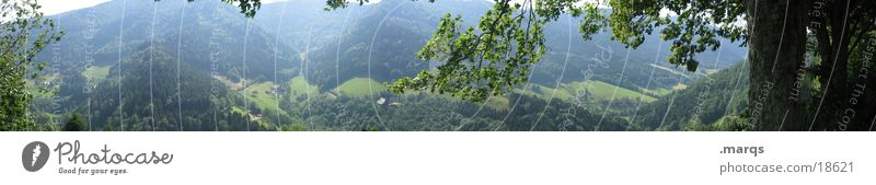 Tree Summer Leaf Far-off places Forest Mountain Large Vantage point Tree trunk Panorama (Format) Valley Plant Agriculture Black Forest Monoculture