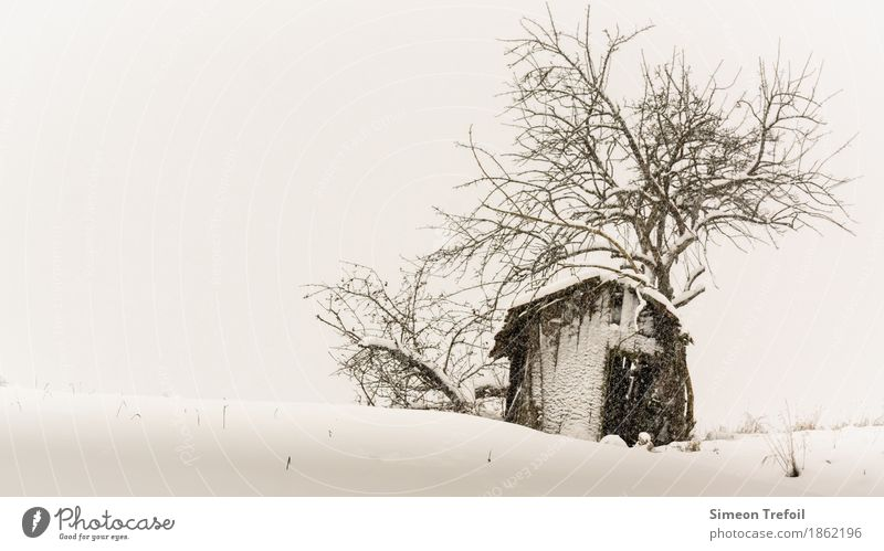 winter cabin Winter Snow Hiking Bad weather Snowfall Tree Field Hill Deserted Hut Old Threat Dark Creepy Black Sadness Grief Death Loneliness Exhaustion Fear
