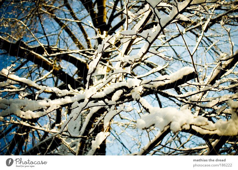 ENCHANTED Environment Nature Landscape Plant Sky Winter Beautiful weather Ice Frost Snow Tree Forest Esthetic Idyll Powder snow Ease Muddled Treetop Abstract