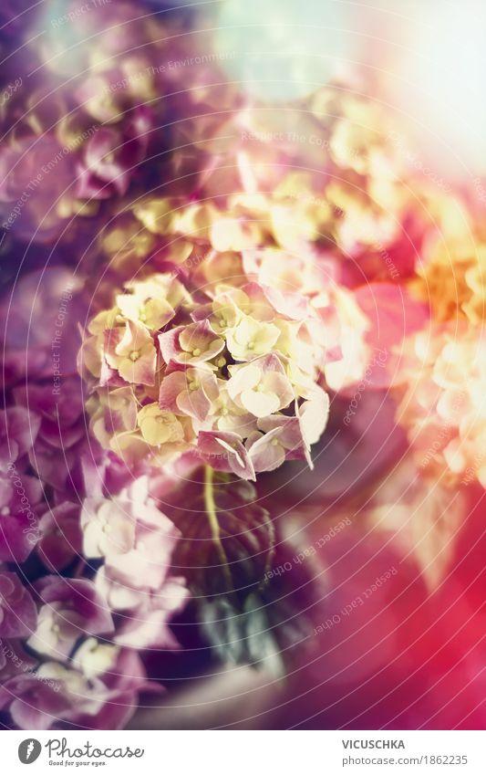 Nature Plant Summer Beautiful Flower Leaf Yellow Blossom Love Spring Autumn Garden Design Pink Decoration Elegant