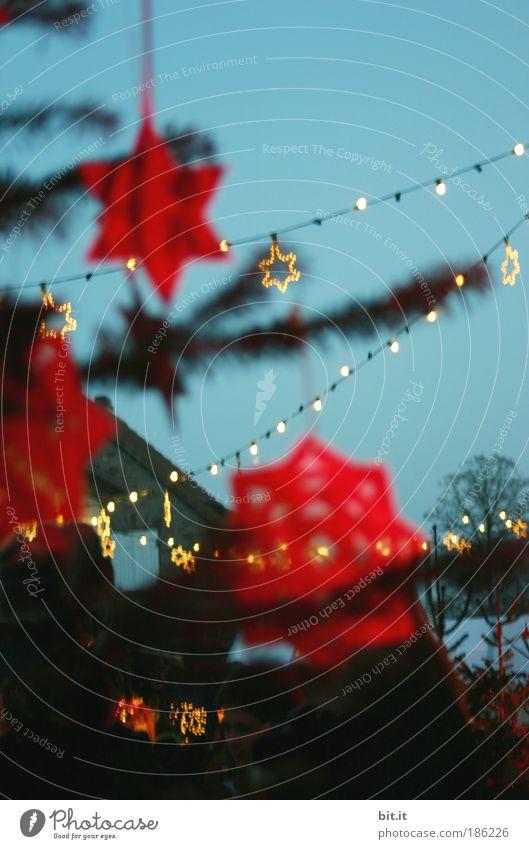 Christmas & Advent Beautiful Red Winter Feasts & Celebrations Glittering Stars Star (Symbol) Christmas tree Decoration Branch Illuminate Blue sky