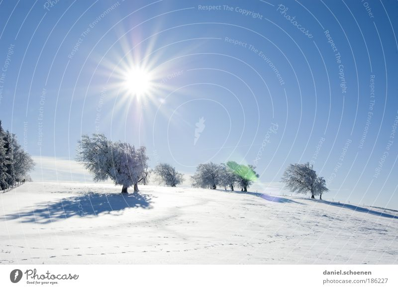 for all winter haters Nature Landscape Sky Cloudless sky Sun Winter Climate Climate change Weather Beautiful weather Tree Blue White Relaxation Happy Hope